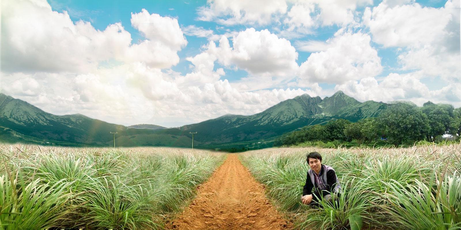 https://tinhdauloda.vn/tinh-dau-sa-chanh-nguyen-chat-lemon-grass-essential-oil